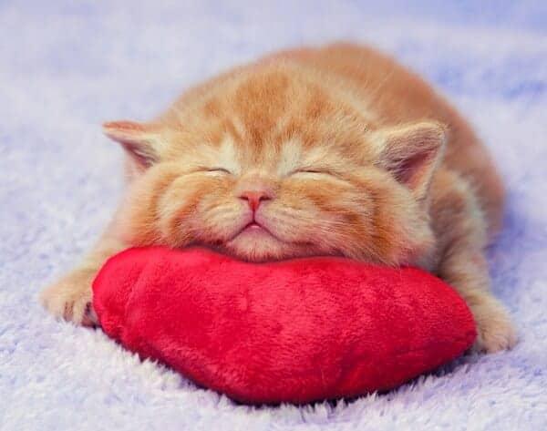 soñar con gatitos